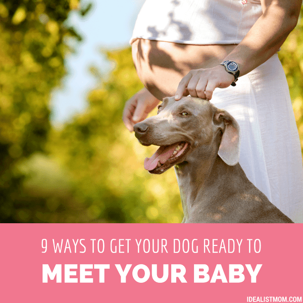 9 Tips for Introducing Dog to Baby