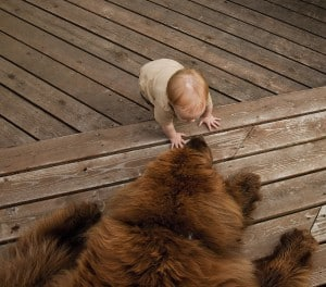 9 Tips for Introducing Dog to Baby: Baby Meets Big Furry Dog!