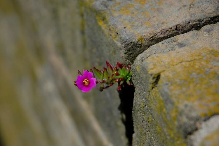 Flower in the Crack