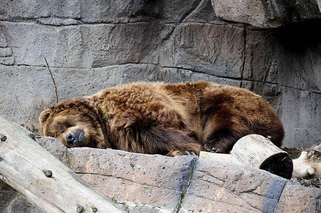Songs for girls to awaken the bear inside