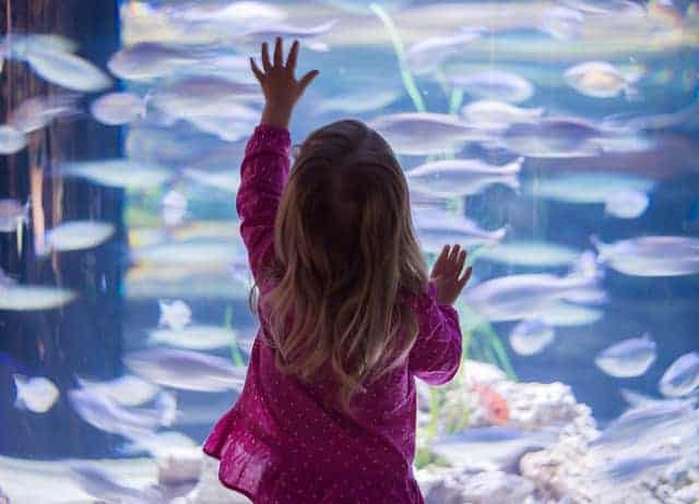 Perfect stocking stuffer for girls: A trip to the zoo or aquarium
